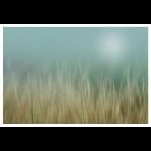 The Picturalist Framed Print on Rag Paper: Bliss