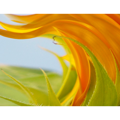 Framed Print on Rag Paper: Sunny With Wind Gusts by Karen Thom