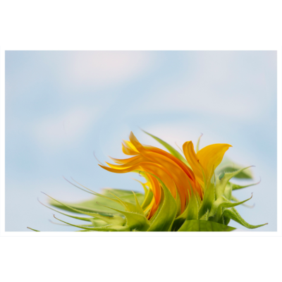 The Picturalist Framed Print on Rag Paper: Sunny With Wind Gusts by Karen Thom