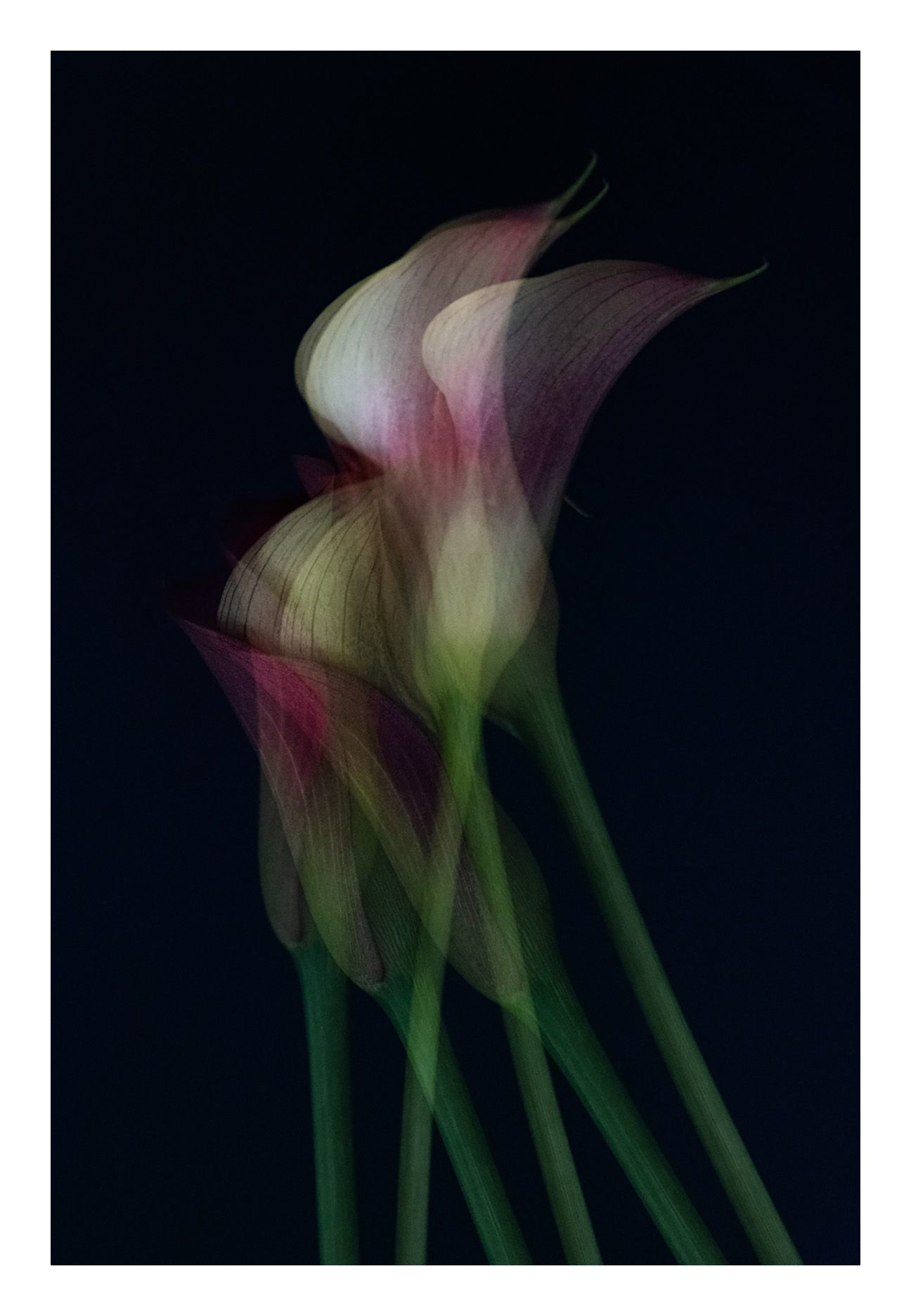 Together by Ana Bonet