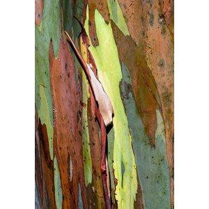 Framed Print on Rag Paper: Natural Skin 1