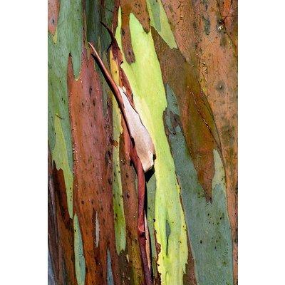 Framed Print on Rag Paper: Natural Skin 1 by D. Clode