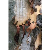 Framed Print on Rag Paper: Natural Skin 2