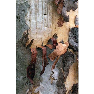 Framed Print on Rag Paper: Natural Skin 2 by D. Clode