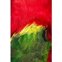 Framed Print on Rag Paper: Plumage Rouge Vert