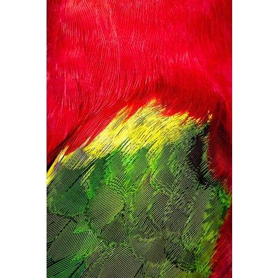 Framed Print on Rag Paper: Plumage Rouge Vert by D. Cole