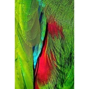 Framed Print on Rag Paper: Plumage Rouge Vert 2