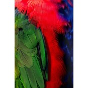 Framed Print on Rag Paper: Plumage Rouge Vert 3 by D. Cole