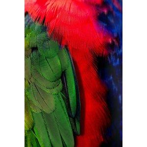 Framed Print on Rag Paper: Plumage Rouge Vert 3