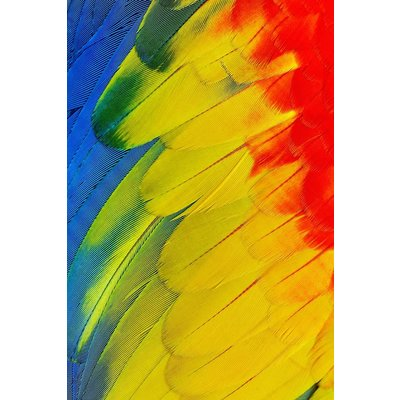 Framed Print on Rag Paper: Plumage Jaune  by D. Cole