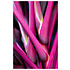 Framed Print on Rag Paper: Tropical Fuscia  by D. Clode