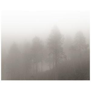 Framed Print on Rag Paper: Monochrome Trees