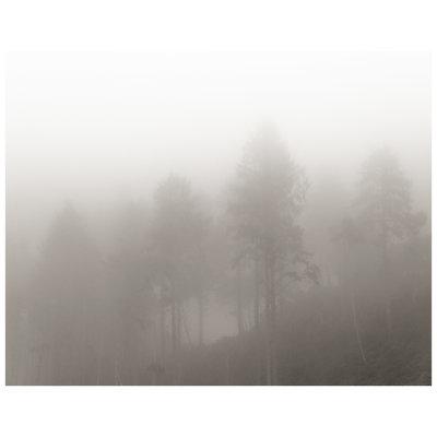 Framed Print on Rag Paper: Monochrome Trees by P. Hendry