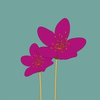 Framed Print on Rag Paper The Garden Cosmos Bipinnatus Flower
