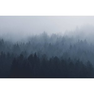 The Picturalist Framed Facemount Metal: Blurred Forest Print on Metal