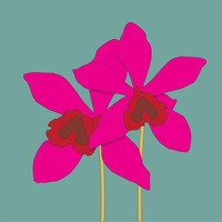 Framed Print on Rag Paper The Orchidaceae Pink Orchid