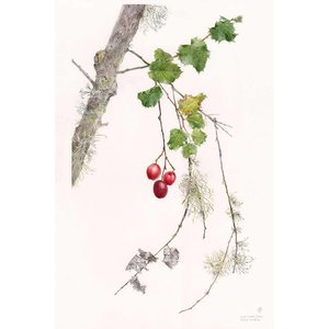 Framed Print on Rag Paper Holly Leaved Cherry