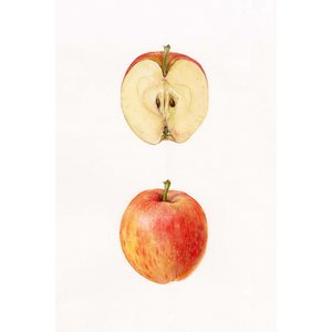 Framed Print on Rag Paper Apple
