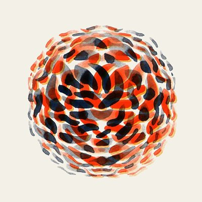 The Picturalist Framed Print on Rag Paper: Protea by Alejandro Franseschini
