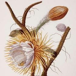 SHOP Botanical Prints