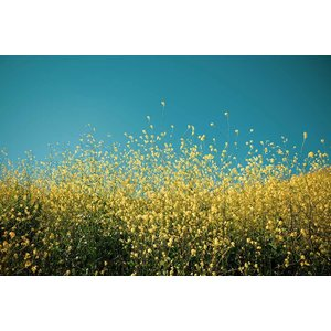 Framed Print on Rag Paper Yellow Fields