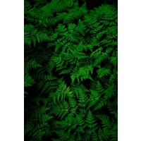 The Picturalist Framed Print on Rag Paper: Fern