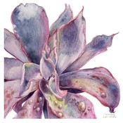 The Picturalist Framed Print on Rag Paper: Echeveria Afterglow by Stephanie Law
