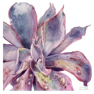 The Picturalist Framed Print on Rag Paper: Echeveria Afterglow