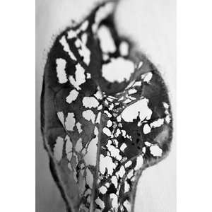 Framed Print on Rag Paper: Feuille Percee 1
