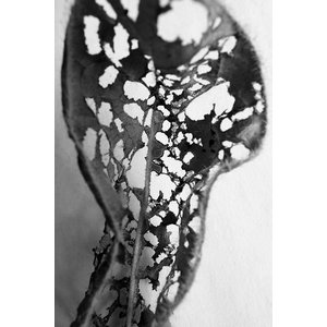 Framed Print on Rag Paper: Feuille Percee 2
