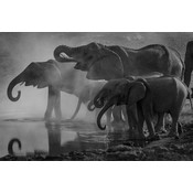 The Picturalist Framed Facemount Acrylic: Elephants 1/4 Inch Thick Acrylic Glass