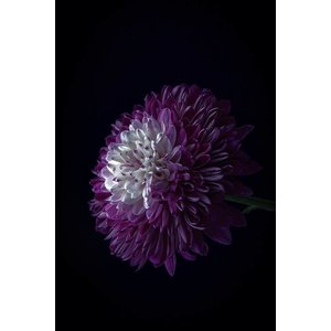 Framed Facemount Acrylic Purple Dahlia 1/4 Inch Thick Acrylic Glass