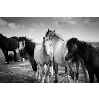 The Picturalist Framed Print on Rag Paper: Horses
