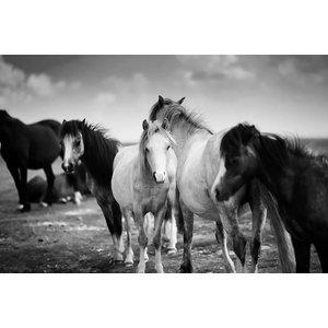 Framed Print on Rag Paper Horses