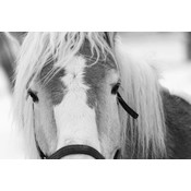 The Picturalist Framed Print on Rag Paper: Poney Horse in Winter