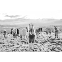 The Picturalist Framed Print on Rag Paper: Wild Horses