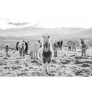 Framed Print on Rag Paper Wild Horses