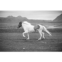 The Picturalist Framed Print on Rag Paper: Mustang Horse
