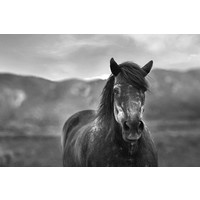 The Picturalist Framed Print on Rag Paper: Percheron Horse