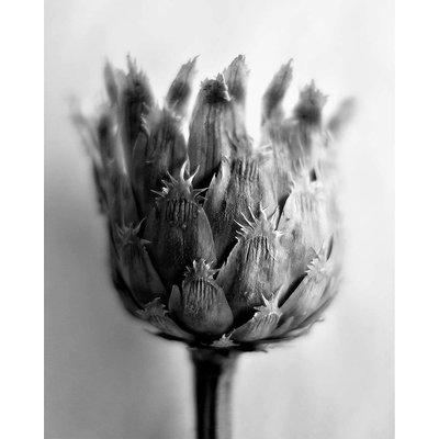 Framed Print on Rag Paper: Fleur de Chardon Photography by Eric Gizard