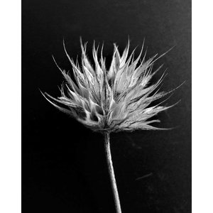 The Picturalist Framed Print on Rag Paper: Fleur de Coton