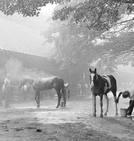 Morning Back at Saratoga 8x10