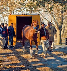 Secretariat Arriving at Claiborne 8x10