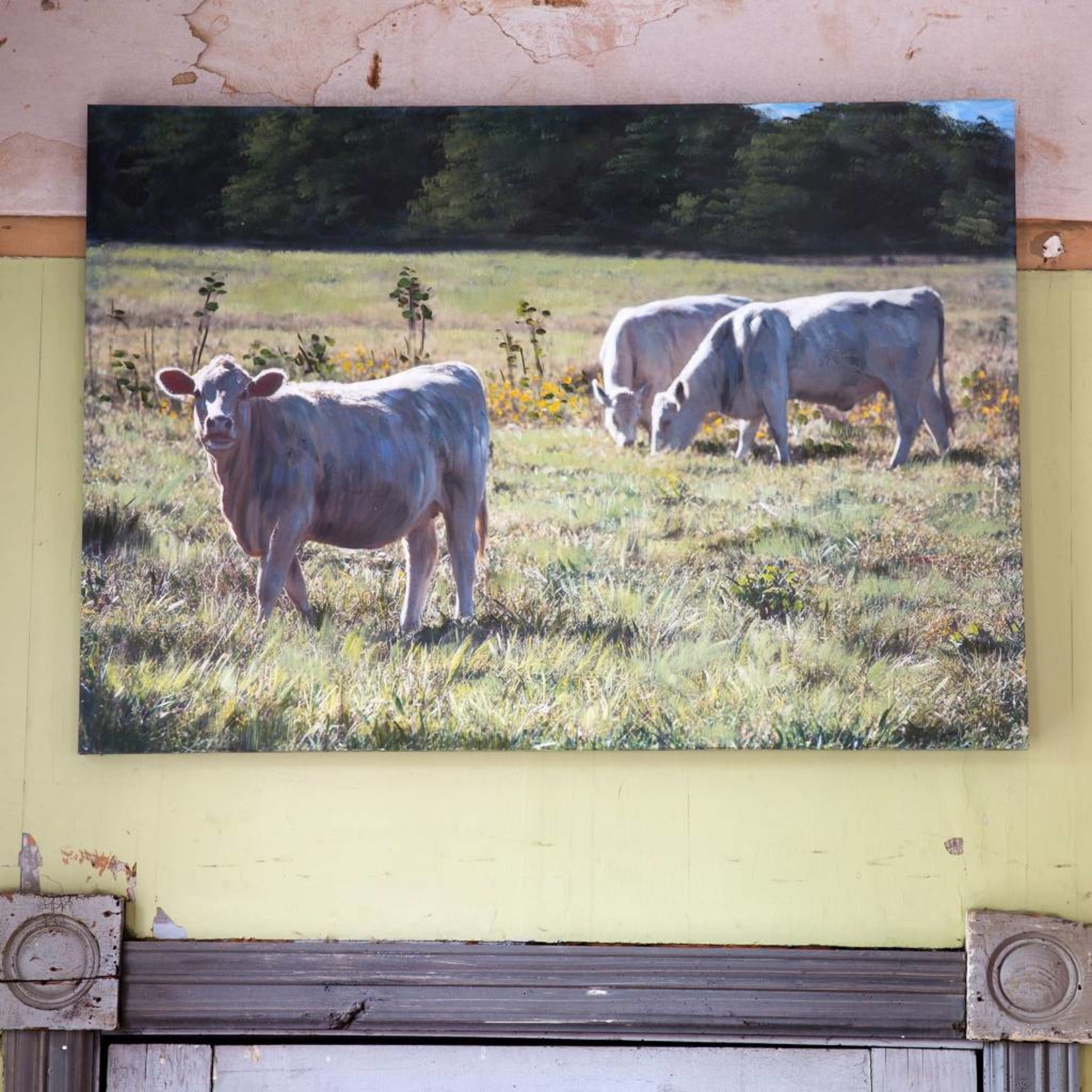 Cows In Pasture Giclee