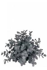Eucalyptus 1/2 Orb