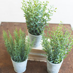 Herb in Cement Pot