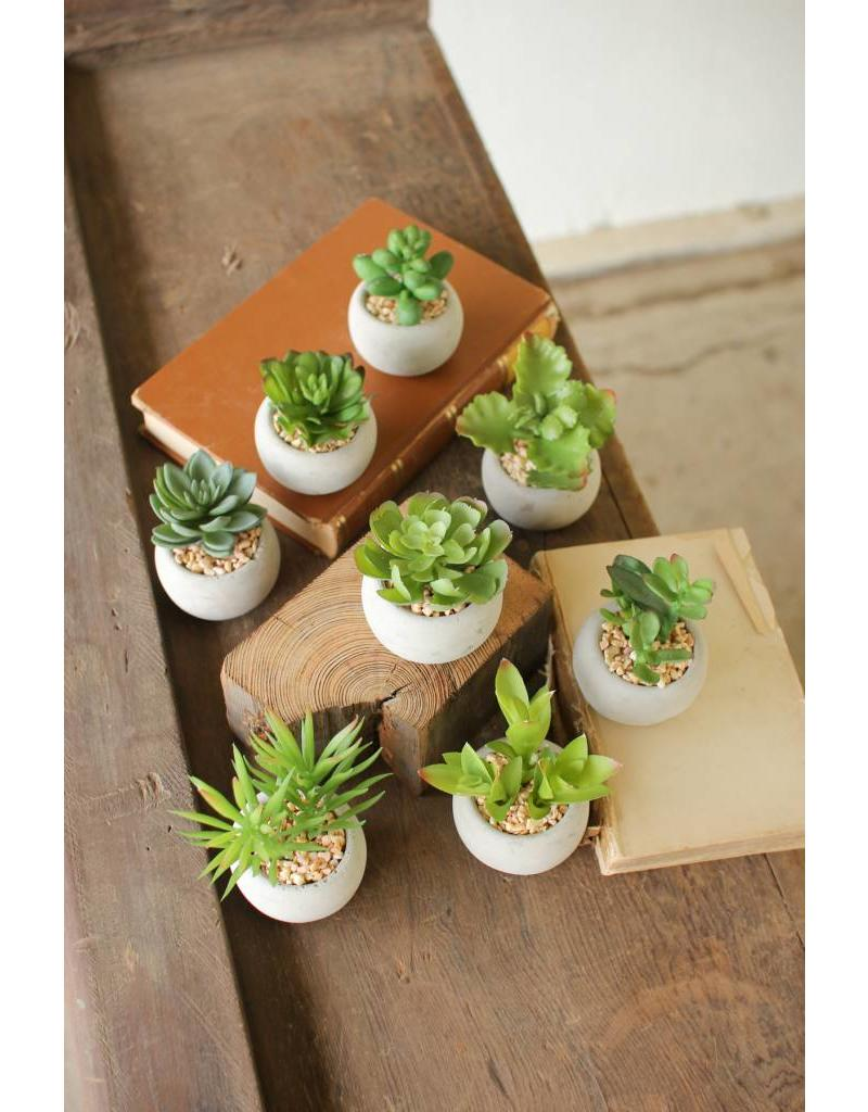 Small Succulent with Round Cement Pot CNL1080