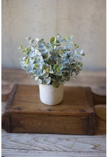 Boxwood Plant in White Cement Pot CNL1136