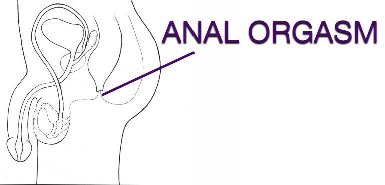 Anus diagram