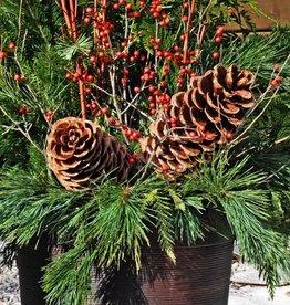 Everyday Christmas Greens Planter - Nov 21st